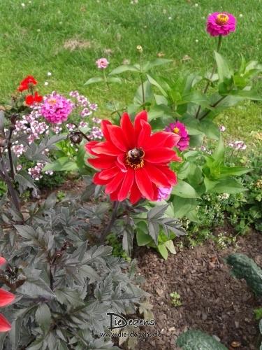 Blume_Hummel