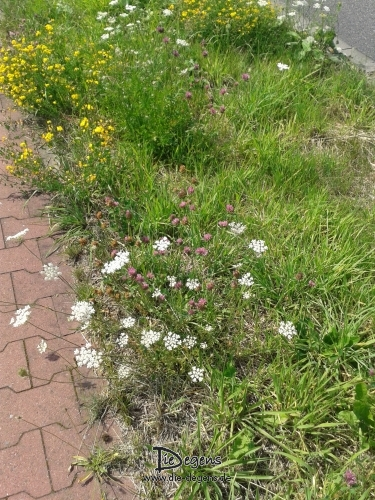 Blumen_Wegesrand