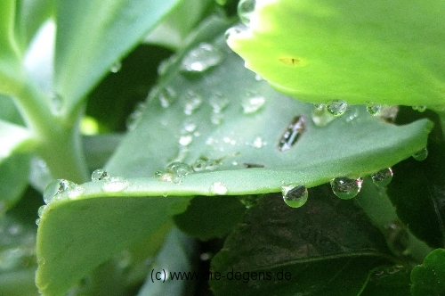 Makro Regen