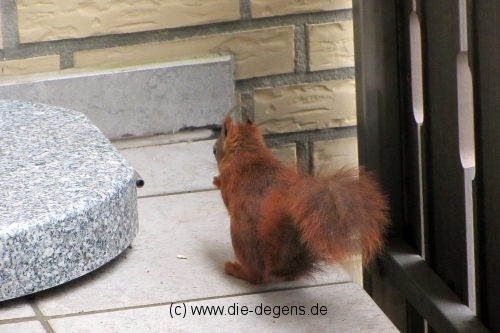 img_4998_eichhoernchen12_wildetiere