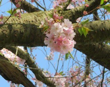 Als der Frühling erwachte…